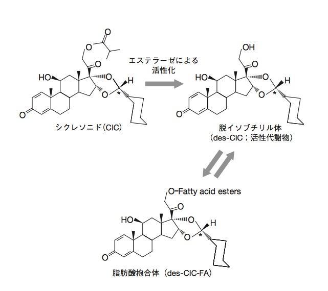 シクレソニド構造式