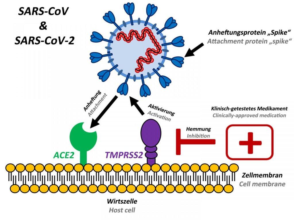 新型コロナウイルス感染様式