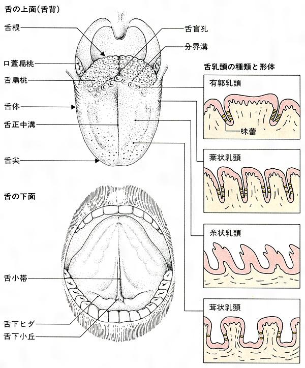 味覚障害(相模原 タナココ漢方薬局・鍼灸接骨院)